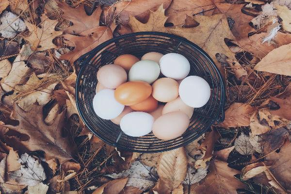 munad korvis, linnufarm