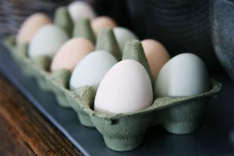 munad, linnufarm